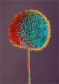 Tree Flower Decoration Decal