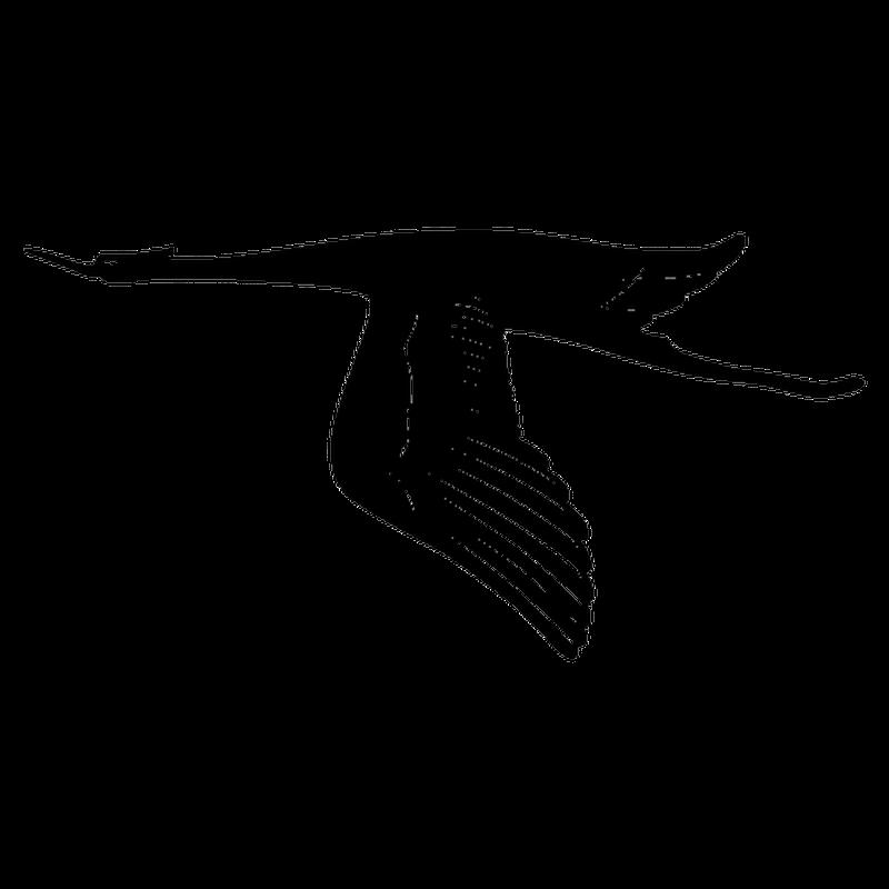Bird in flight Decal