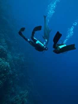Sticker Déco Plongée sous marine avec un dauphin