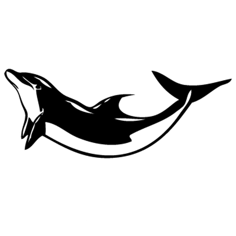 Dolphin camping car decal for Autocollant decoration