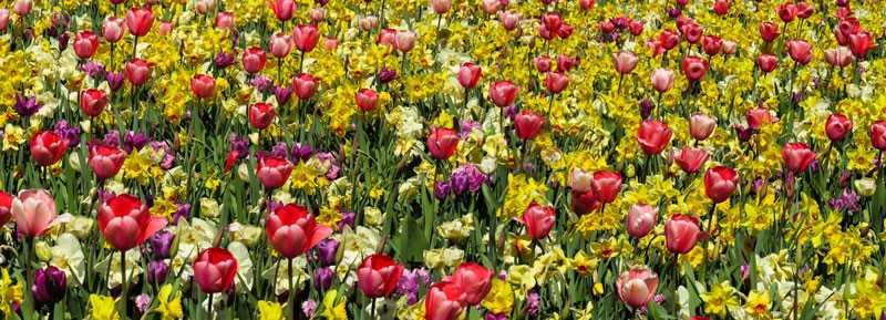 Aufkleber Tête de Lit Jardin Fleurs Tulipes