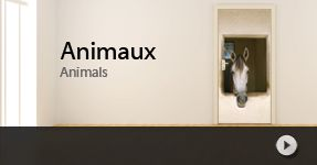 stickers porte cheval, chien, chat... animaux personnalisable