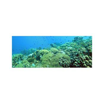Dekoaufkleber Aquarium Hintergrund