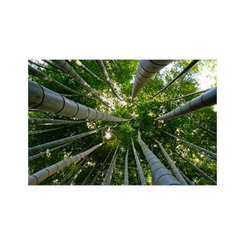 Decoration Sticker Bamboo