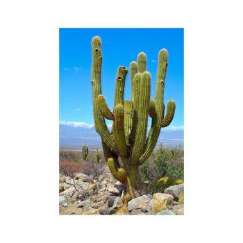 Decoration Sticker Cactus 1
