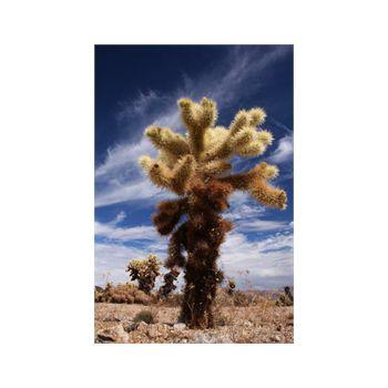 Decoration Sticker Cactus 2
