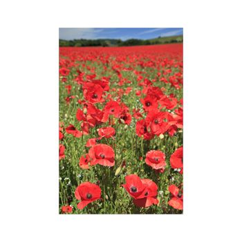 Poppy Field Decoration Decal