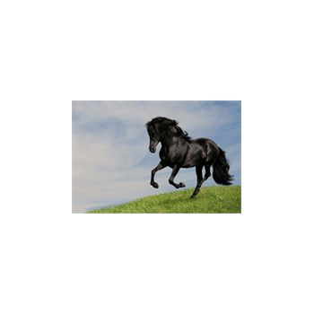Decoration Sticker Black horse at gallop