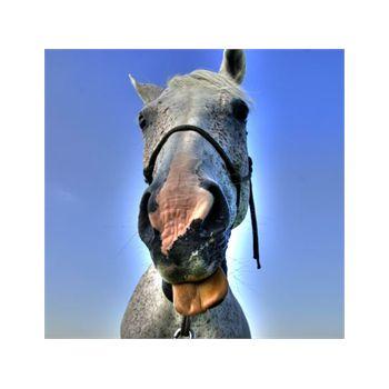 Decoration Sticker Horse 10