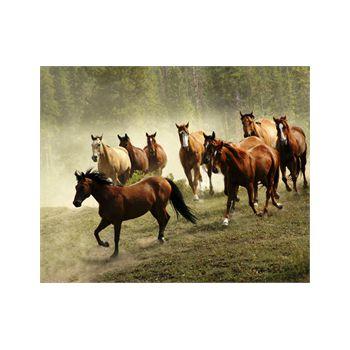 Decoration Sticker Horse 1
