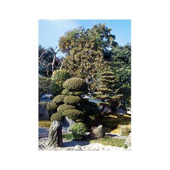 Sticker groß Jardin Japonais