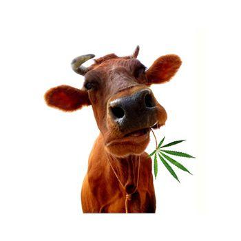 Sticker Géant Vache Feuille de Cannabis