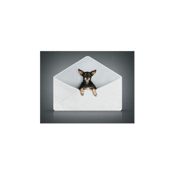 Sticker Déco Petit Chien dans une Enveloppe