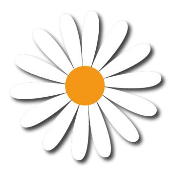 Ox-eye daisy decal
