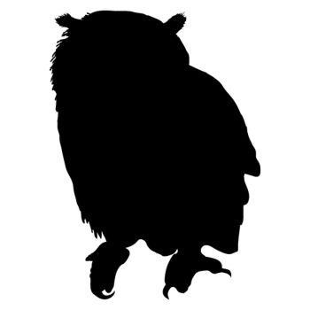 Safari owl decal