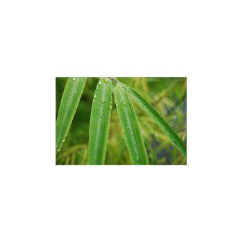 Wandsticker groß Bambou