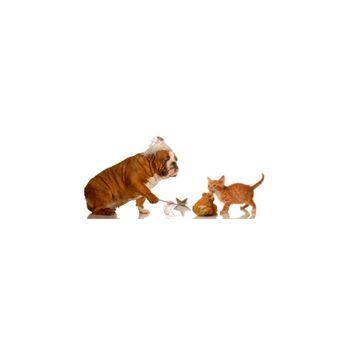 Sticker chat et Chien
