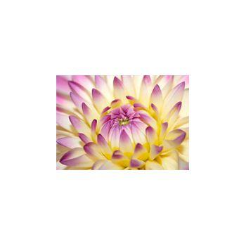 Sticker Deco muraux Fleur de lotus