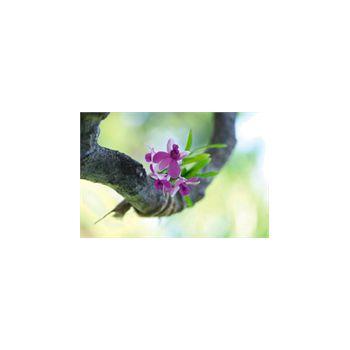 Sticker Deco muraux Orchidée