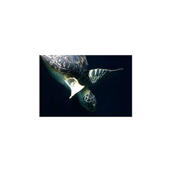 Wandsticker Schildkröte de mer