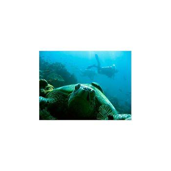 Stickers muraux Tortue de mer et Plongeur