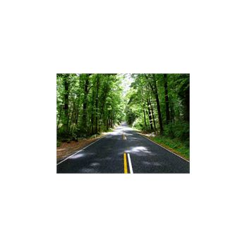 Sticker Wanddekoration Route dans la Forêt