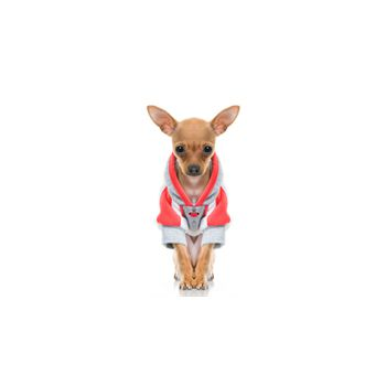 Sticker Deko kleiner Hund drôle dans une veste