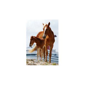 Sticker Deko Pferde des caraïbes