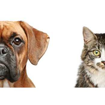 autocollant chien et chat